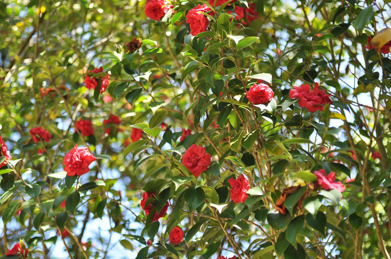 Сказочные цветы по дороге к парку