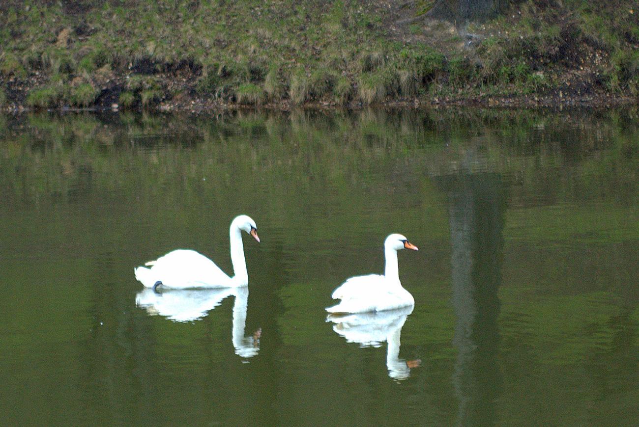 пруд  парка Царицыно