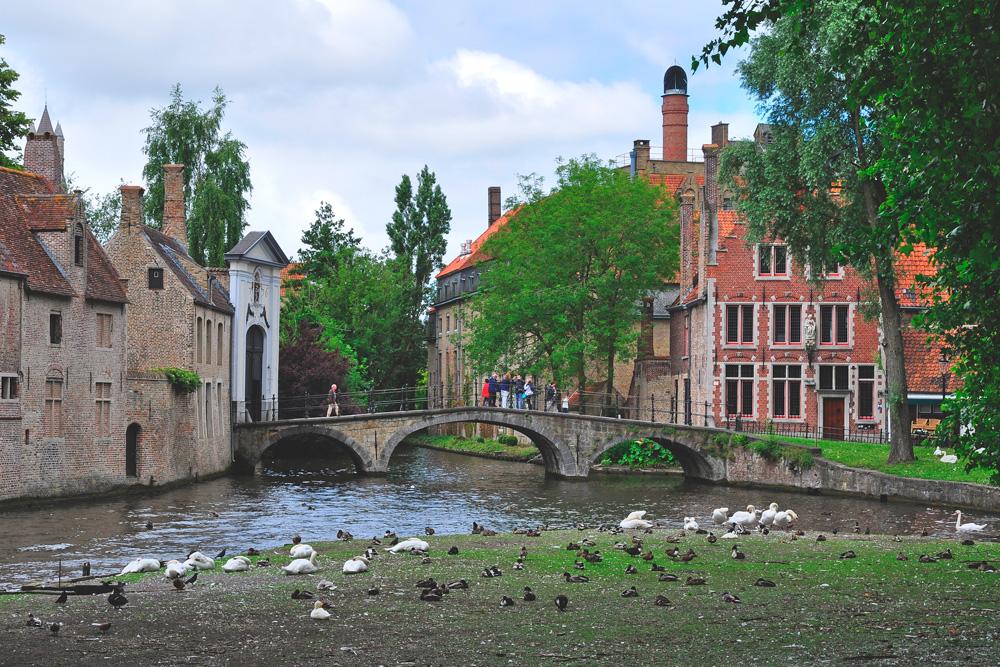 лужайка с лебедями в Брюгге