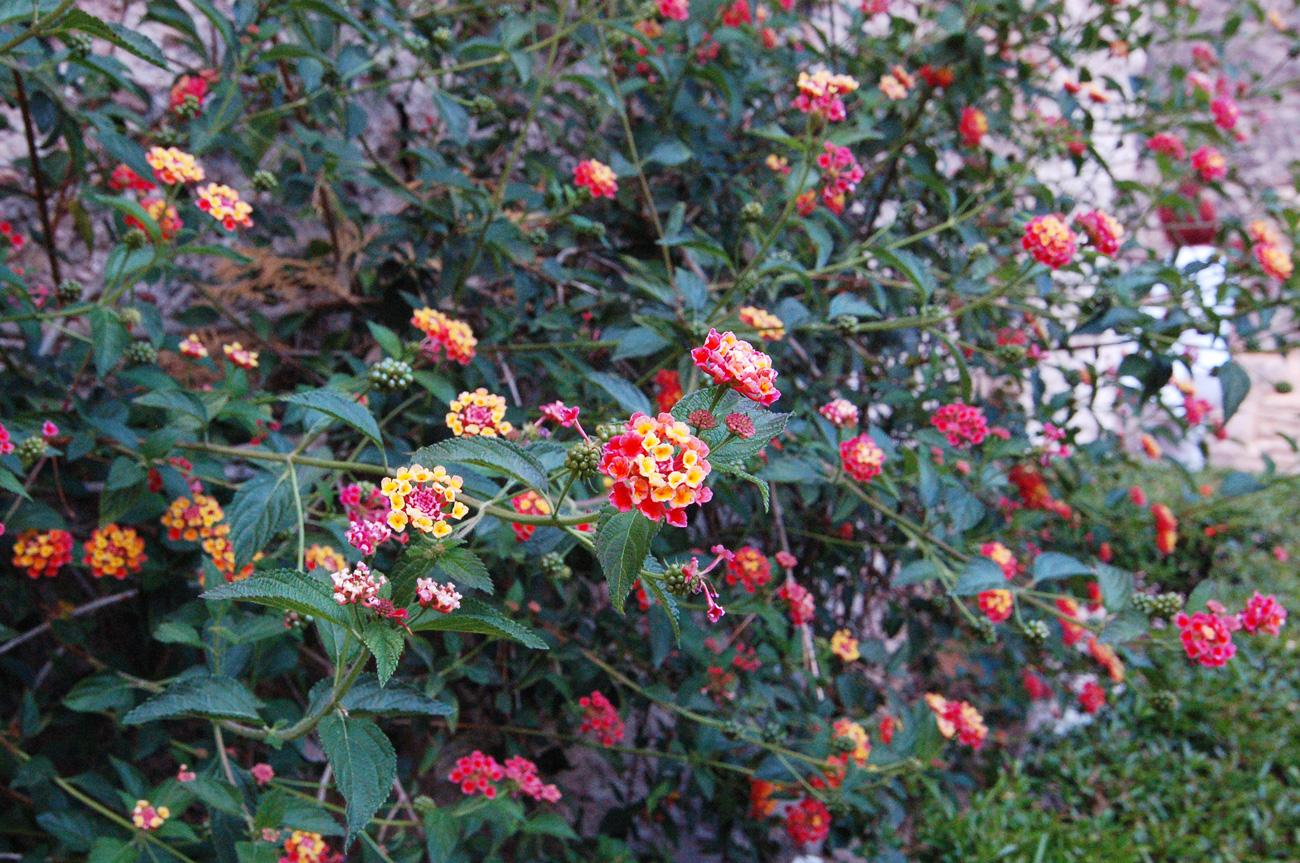 Цветущие кустарники в Севильском Алькасаре